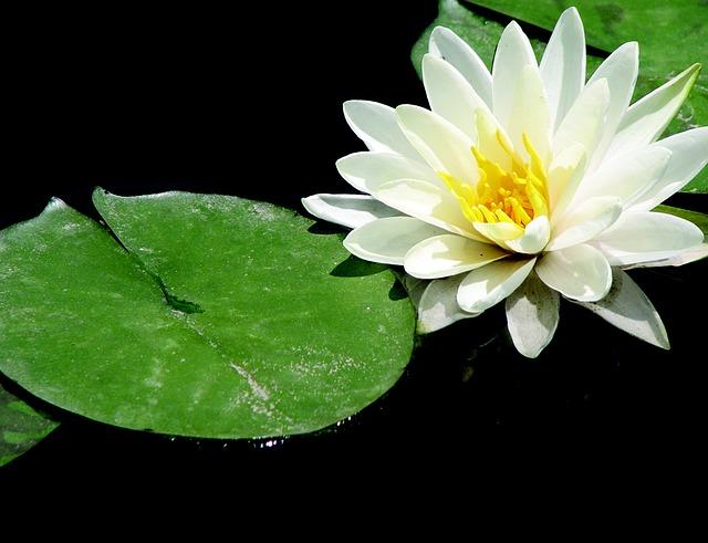 lotus совершенные формы позволят отстраниться от насущных проблем фото