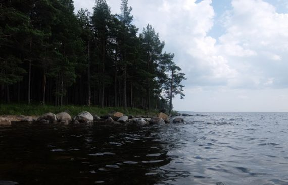 Берег Онежского озера фото