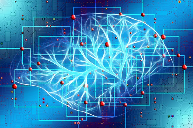 функциональные участки головного мозга картинка
