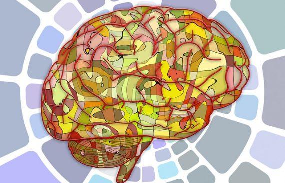 участки мозга картинка